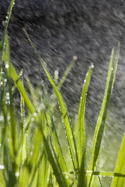Can I Spray Atrazine While It Is Raining Home Guides Sf Gate