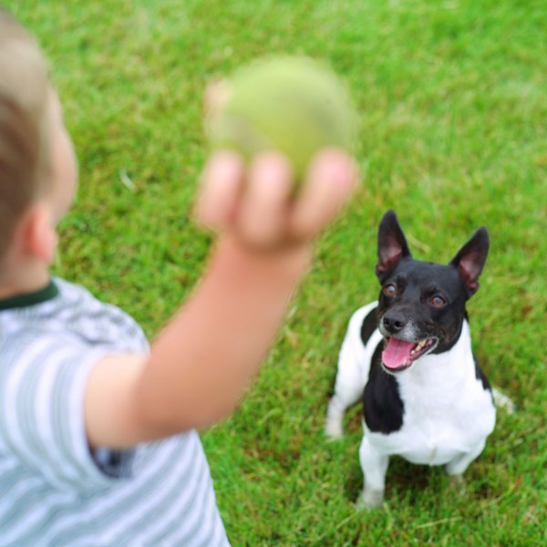 Finding a durable ball for your dog is not as hard as you might think.