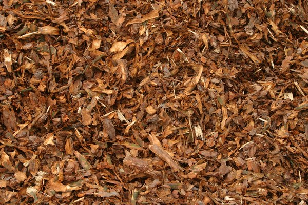 Mulch Prevents Weeds From Growing Under Pine Trees