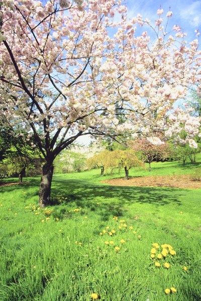 Puedes elegir árboles con copa, caducos o perennes.