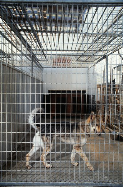 Many animal shelters organize sanitation efforts with a detailed plan that all workers must follow.