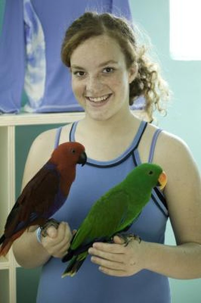 Why Is My Eclectus Parrot Screaming? | Animals - mom me