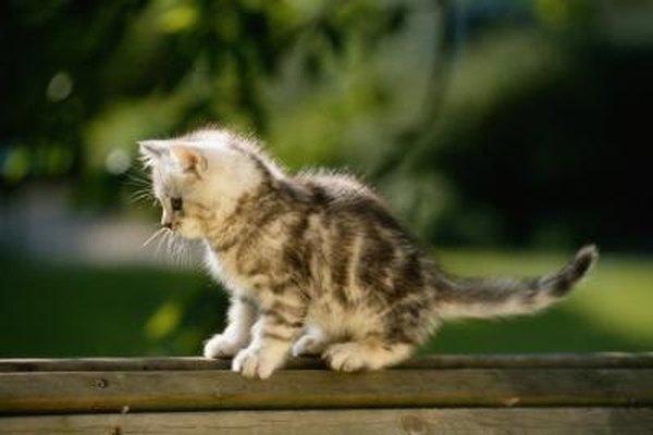 kitten weaned too early