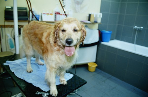 Professional groomers use dryers designed for dogs.