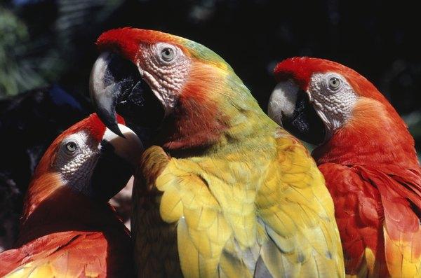 Não estimule a criação de animais silvestre e denuncie o tráfico