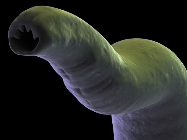 The head of a hookworm