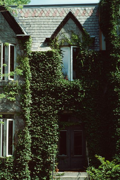 english ivy and mold