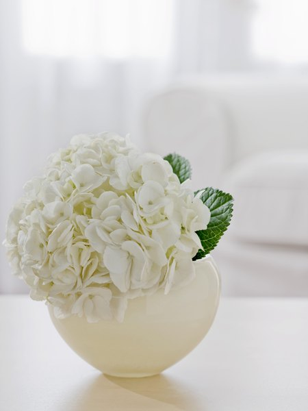 Difference between snowball bush hydrangea home guides sf gate mightylinksfo