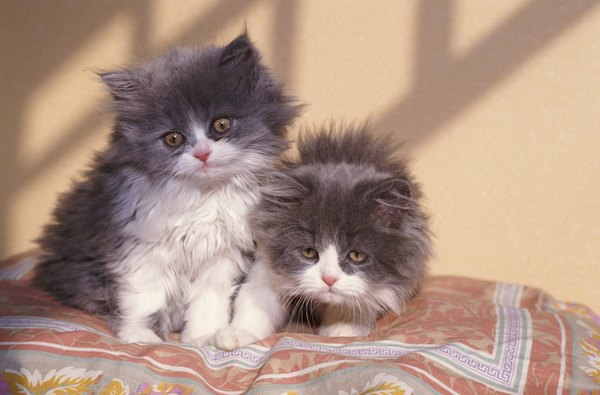 Can Cats Have Contractions In The First Stage Of Labor Pets