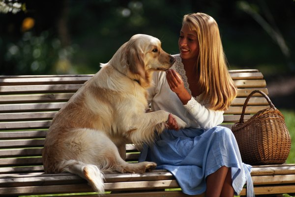 Golden retrievers make excellent therapy dogs as well as service dogs.