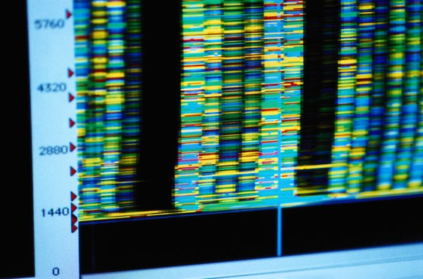 DNA fingerprinting is often used to identify genetic disorders.