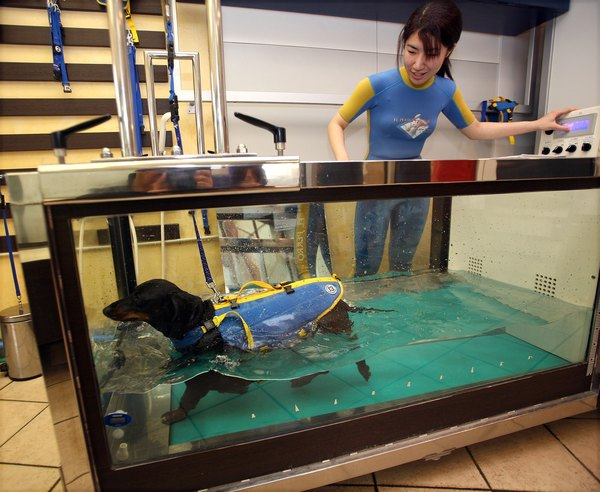 Underwater treadmill therapy is one way to improve your dog's joint function.