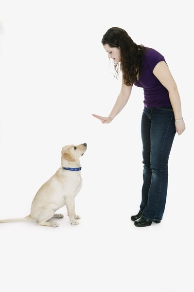 Get your dog into the habit of being calm and obedient.