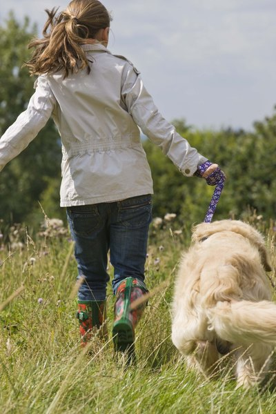 Brush your goldendoodle's coat following outings to avoid matting.
