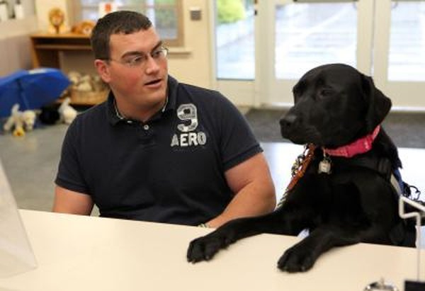 Vets with service-related disabilities may qualify for assistance dogs under federal benefit programs.
