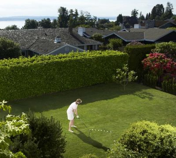 How to Grow a Tall Hedge in the Shade | Home Guides | SF Gate Zone Shade Garden Designs Html on