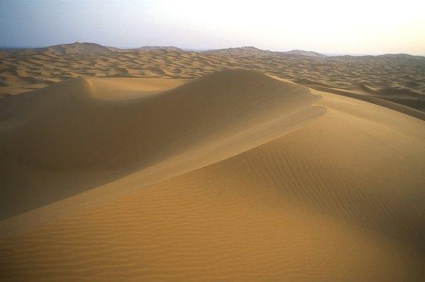 The Sahara Desert was once a tropical paradise.