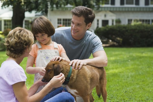 Use the Innotek SD 3000 system to keep your dog safely in your yard.
