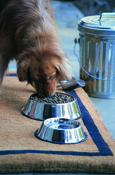 Standard high-quality commercial dog foods are usually fine without added fiber.