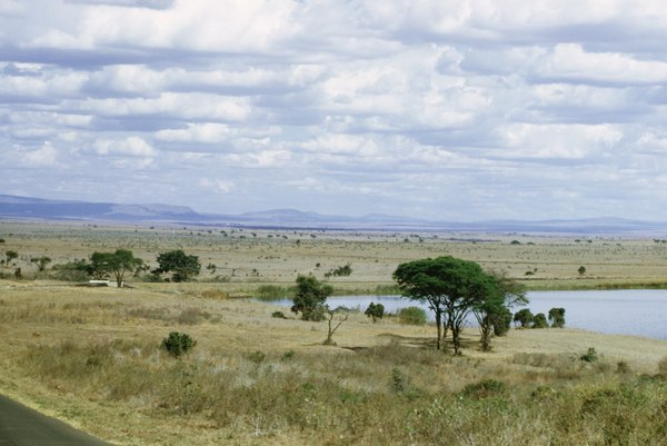 A rich grassland
