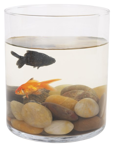 what happens when a goldfish starts to get black all over