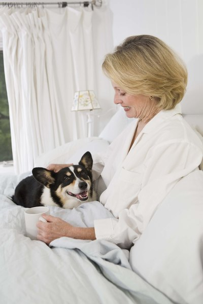 Setting strict boundaries can help teach your dog not to sleep on your bed.