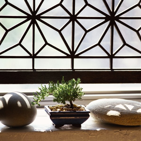 some bonsai plants are poisonous others arenu0027t