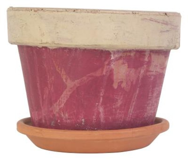 Tips On Using Terra Cotta Pots For Houseplants Home Guides Sf Gate