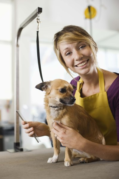You can groom your dog yourself or take your dog in to a professional dog groomer.