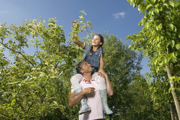 Variedades de árboles frutales te garantizarán aves en tu jardín.
