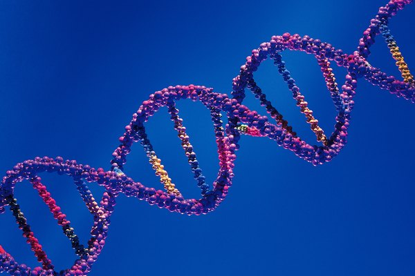 describe the basic shape purpose of the dna molecule education
