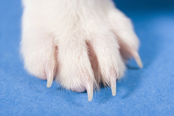 Pink paws sometimes mean white nails, a helpful feature on pedicure day.