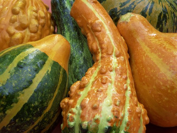 Are Decorative Gourds Poisonous To Dogs Home Guides Sf Gate