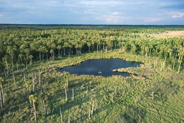 Wetland ecosystems provide habitats for many bird species.