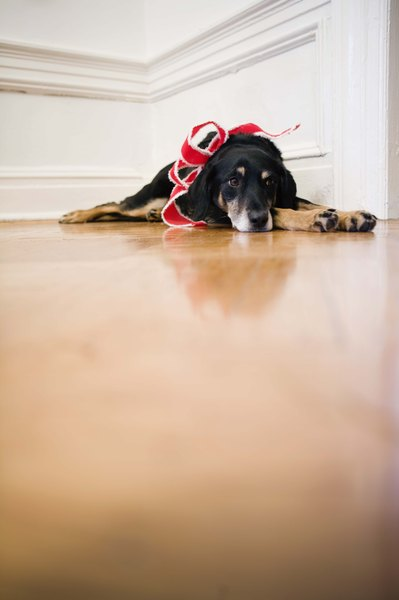 A pair of traction socks can help your dog negotiate slick floors.