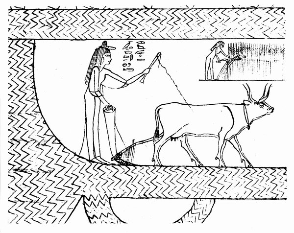 The soft pith formed the writing surface of papyrus.