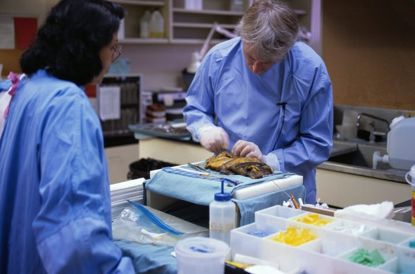 """becoming a forensic pathologist Forensic pathology career & salary outlook one of the most lucrative and in-demand subfields of forensics is pathology these """"death detectives"""" are licensed physicians with special training to perform autopsies and determine the cause of a death, disease, or injury."""