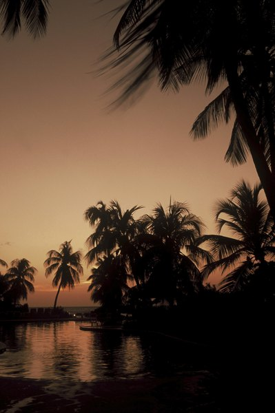 Se encuentra en la región de las Antillas Holandesas.