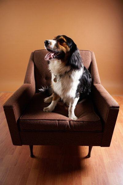 Pet Insurance Companies >> How to Keep Dogs From Using the Bathroom on the Furniture - Pets