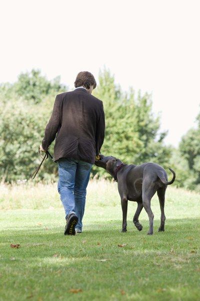 the best training collar or harness for a great dane puppy pets
