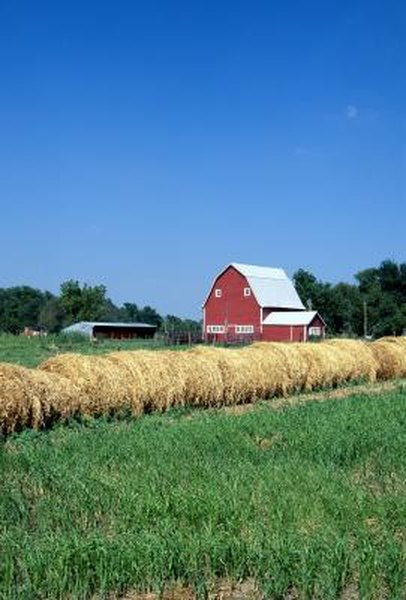 Investors are taking a renewed interest in farmland as food prices continue to rise.