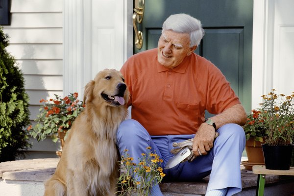 Older dogs are prone to developing arthritis.
