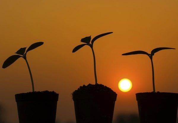 Algumas espécies preferem ambientes com mais ou menos sol