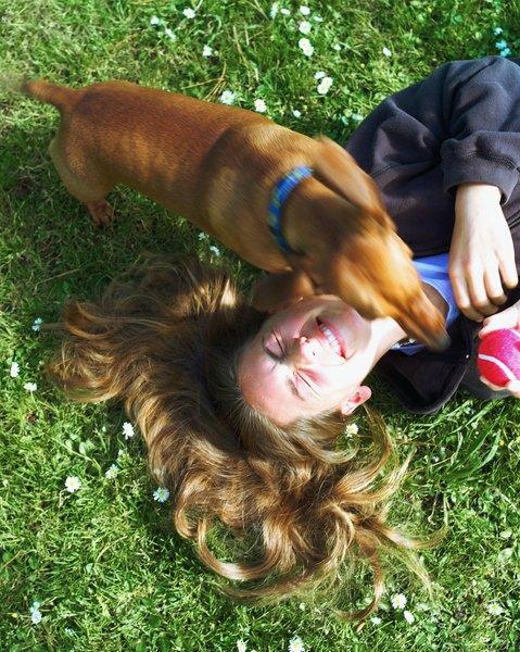 Cão feliz: Brincar com um cão irá animá-lo