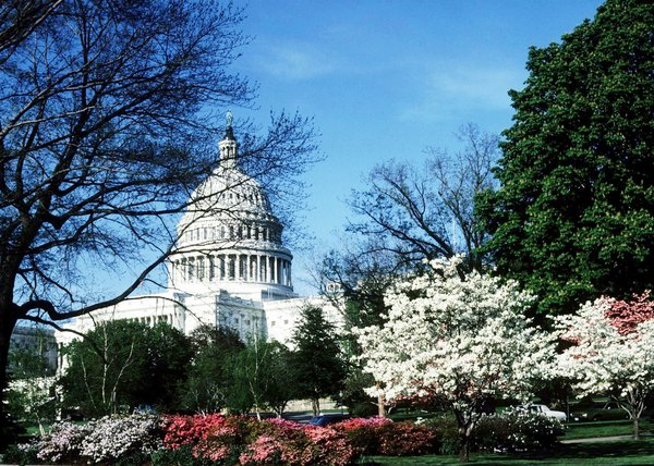 executive branch requirements to hold office