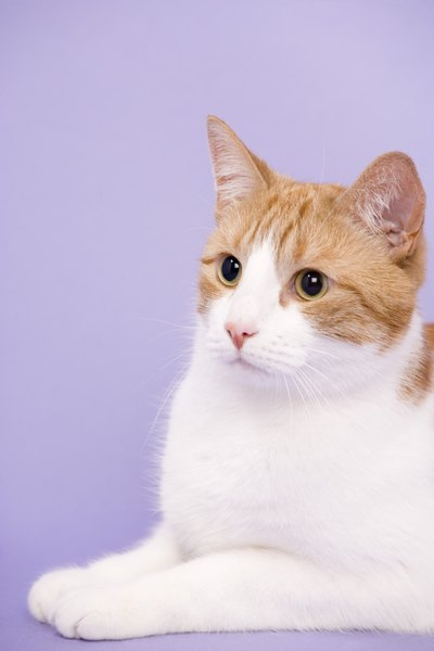 frequent urination in senior cats