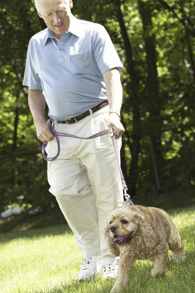 Give your pup lots of praise for following commands during his walk.