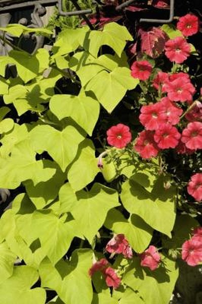 What Type of Flowers Are in Tiered Flower Pots? & What Type of Flowers Are in Tiered Flower Pots?   Home Guides   SF Gate