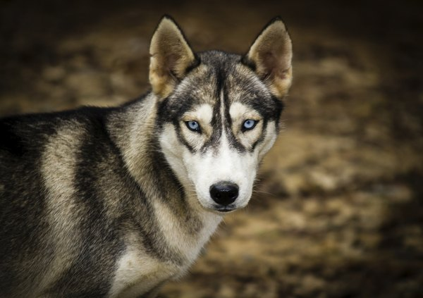 Rare Color Of Eyes For Dogs Light Brown Green
