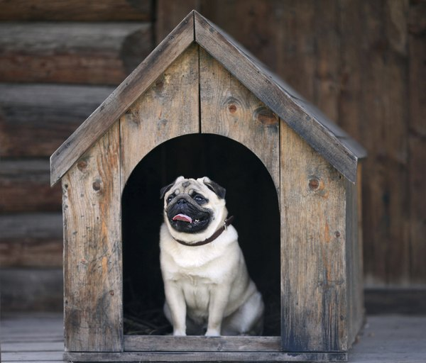 Outdoor Dog Kennel Flooring Ideas Pets